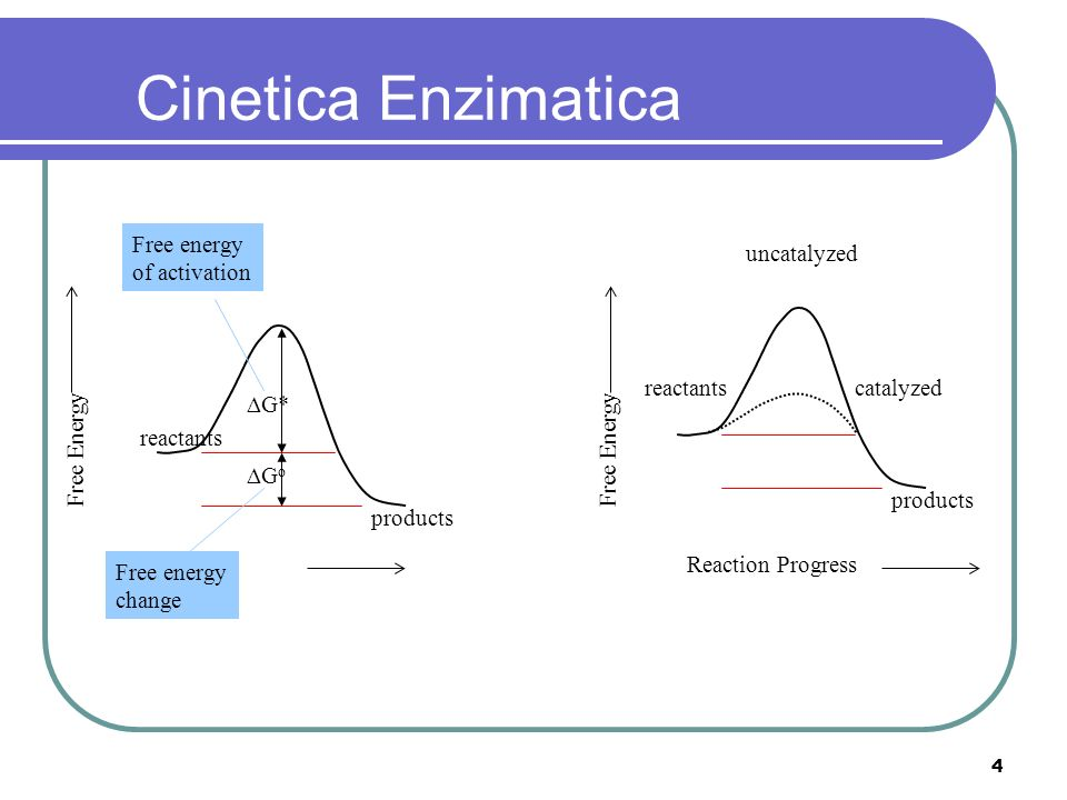 Cinetica Enzimatica Free energy of activation uncatalyzed reactants