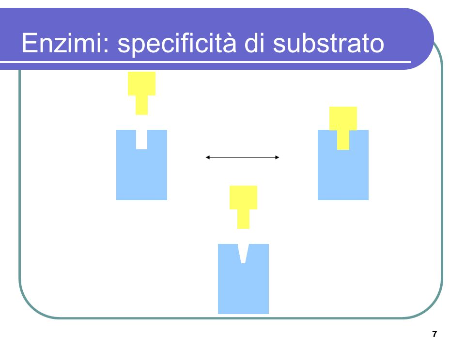 Enzimi: specificità di substrato