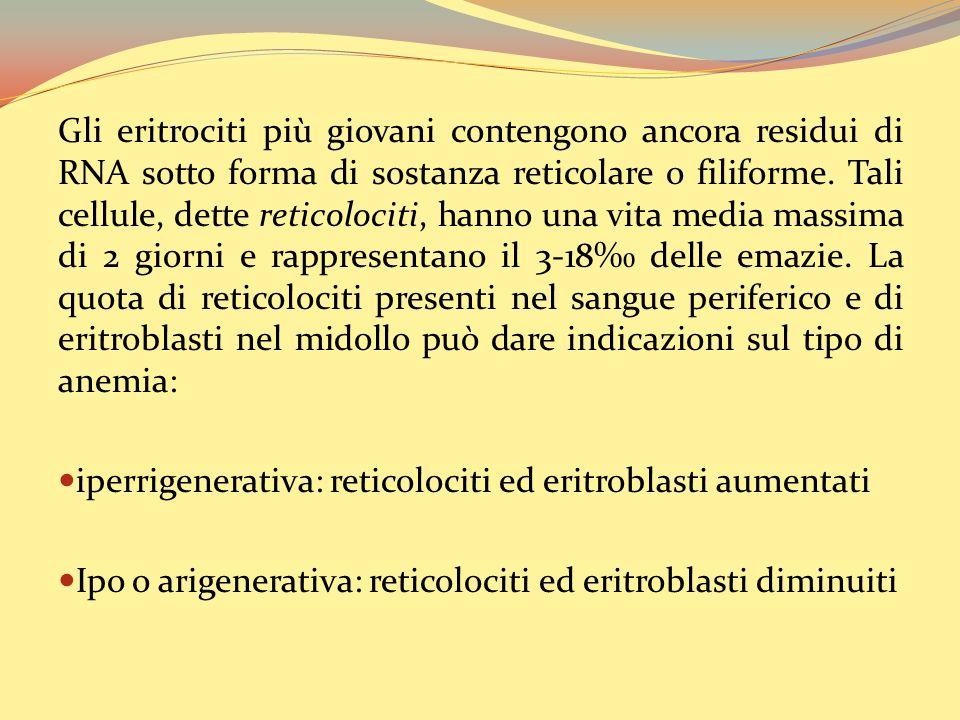 Gli eritrociti più giovani contengono ancora residui di RNA sotto forma di sostanza reticolare o filiforme. Tali cellule, dette reticolociti, hanno una vita media massima di 2 giorni e rappresentano il 3-18‰ delle emazie. La quota di reticolociti presenti nel sangue periferico e di eritroblasti nel midollo può dare indicazioni sul tipo di anemia: