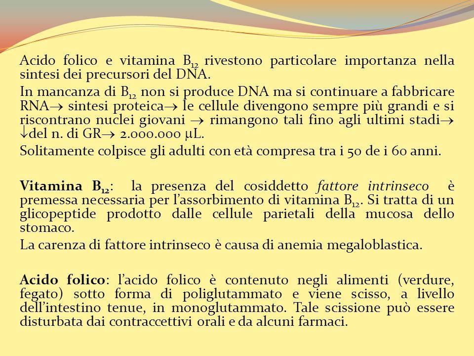 Acido folico e vitamina B12 rivestono particolare importanza nella sintesi dei precursori del DNA.