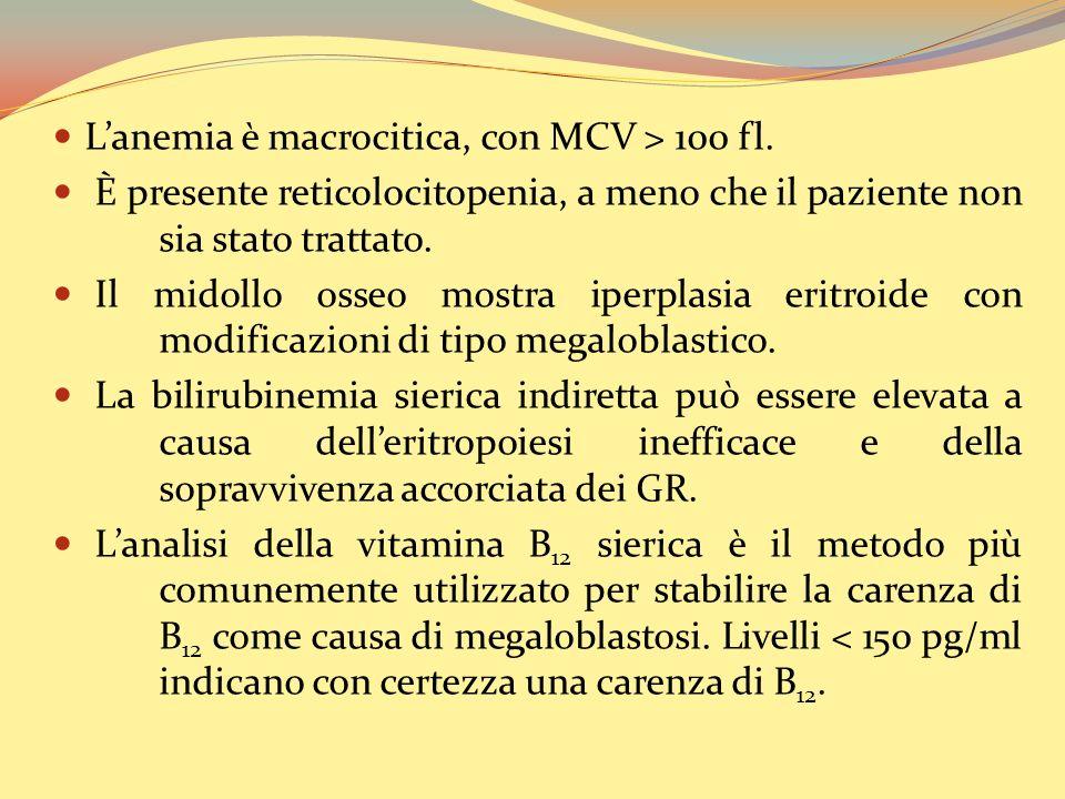 L'anemia è macrocitica, con MCV > 100 fl.