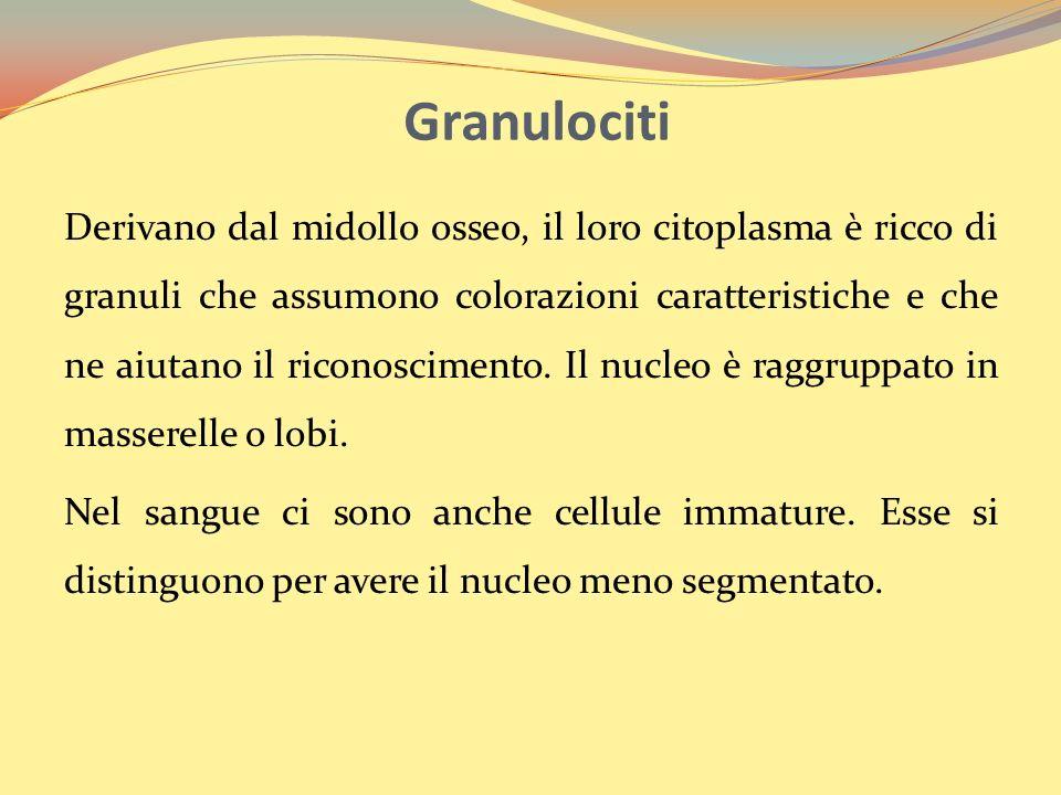 Granulociti
