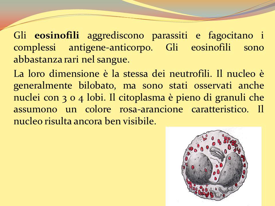 Gli eosinofili aggrediscono parassiti e fagocitano i complessi antigene-anticorpo. Gli eosinofili sono abbastanza rari nel sangue.