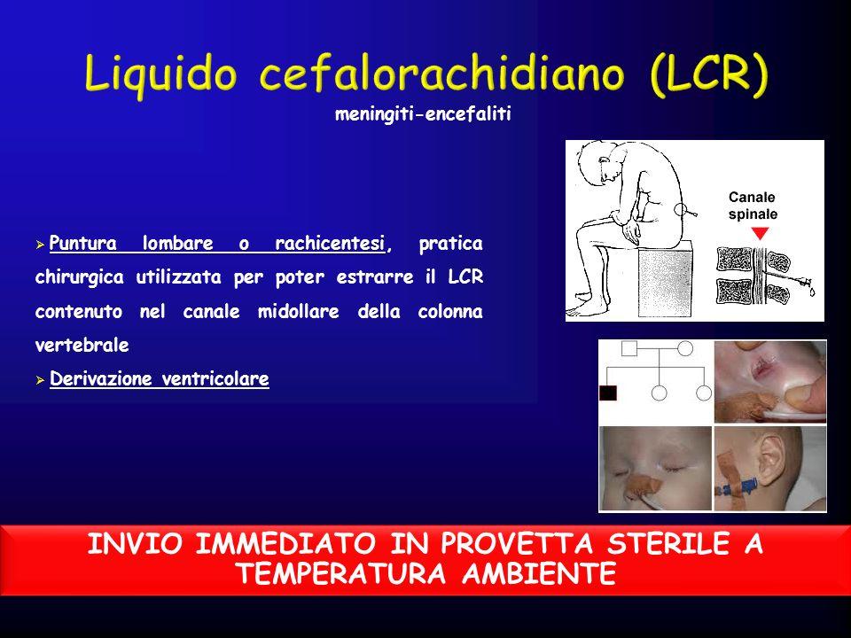 Liquido cefalorachidiano (LCR)