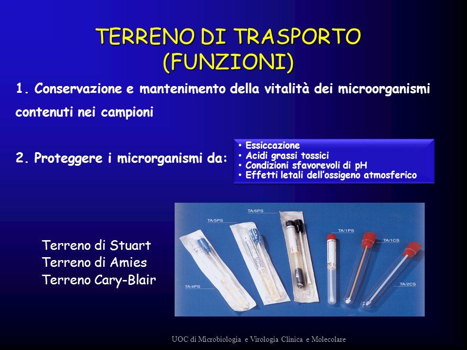TERRENO DI TRASPORTO (FUNZIONI)