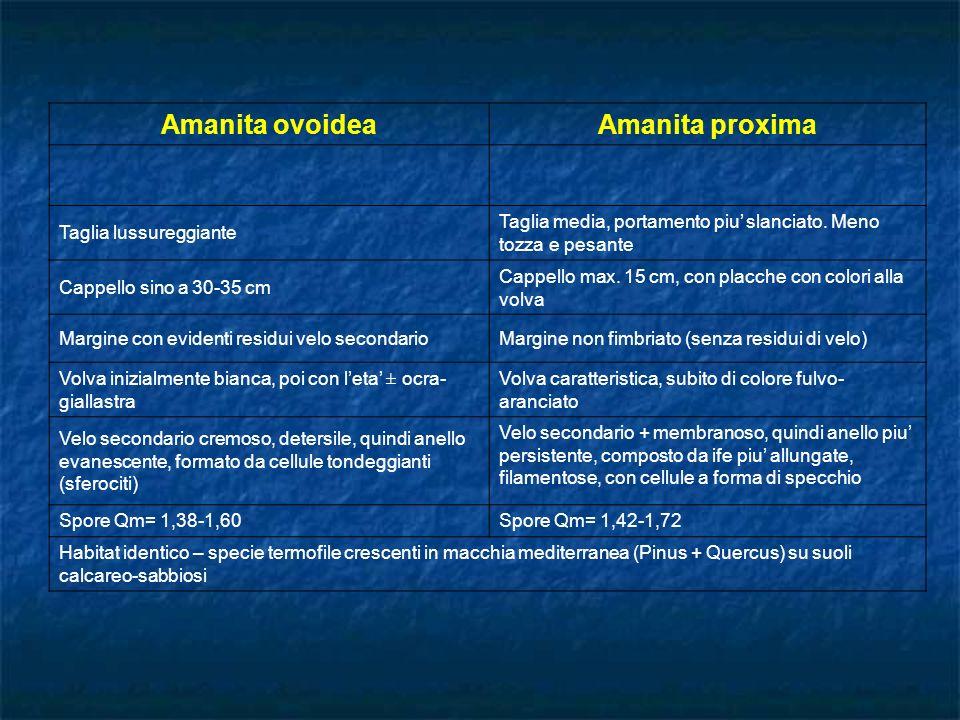 Amanita ovoidea Amanita proxima