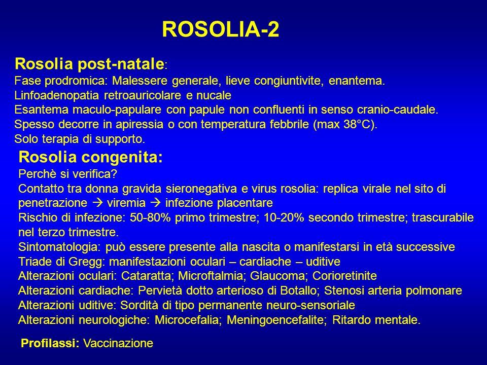ROSOLIA-2 Rosolia post-natale: Rosolia congenita: