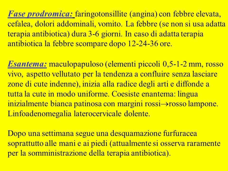 Fase prodromica: faringotonsillite (angina) con febbre elevata, cefalea, dolori addominali, vomito. La febbre (se non si usa adatta terapia antibiotica) dura 3-6 giorni. In caso di adatta terapia antibiotica la febbre scompare dopo 12-24-36 ore.