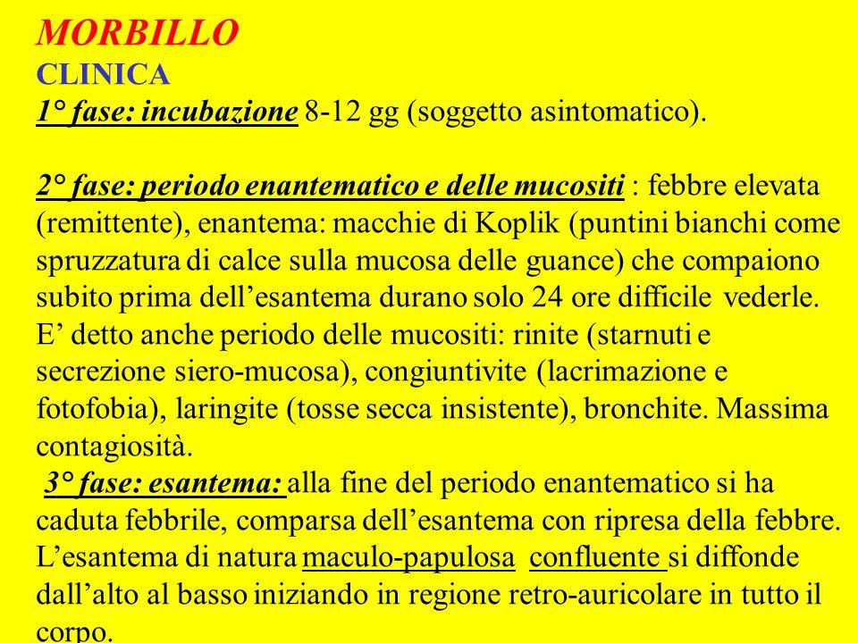 MORBILLO CLINICA 1° fase: incubazione 8-12 gg (soggetto asintomatico).