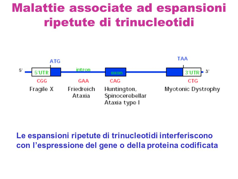 Malattie associate ad espansioni ripetute di trinucleotidi