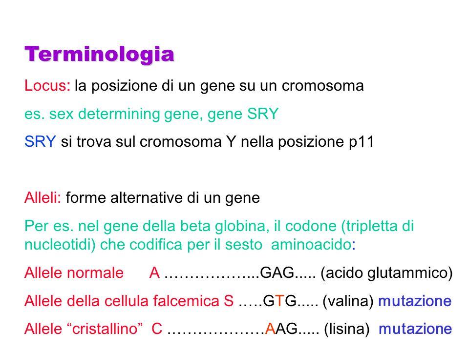 Terminologia Locus: la posizione di un gene su un cromosoma