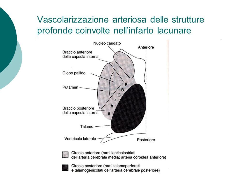 Vascolarizzazione arteriosa delle strutture profonde coinvolte nell'infarto lacunare