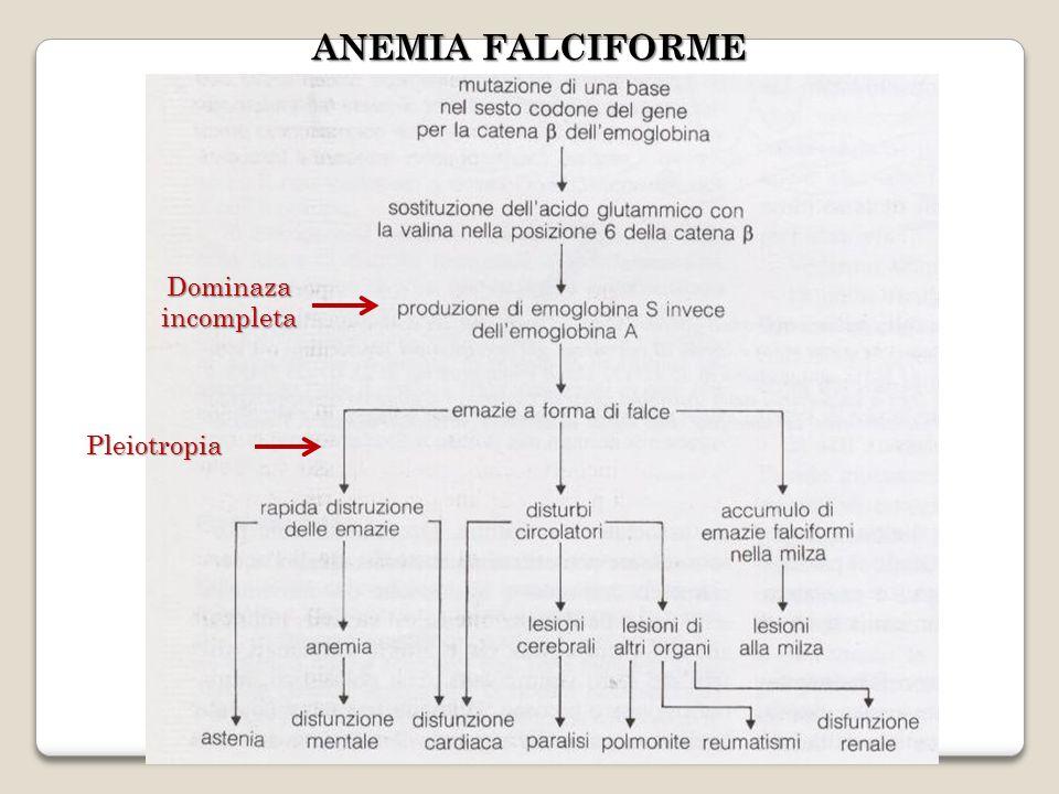 ANEMIA FALCIFORME Dominaza incompleta Pleiotropia