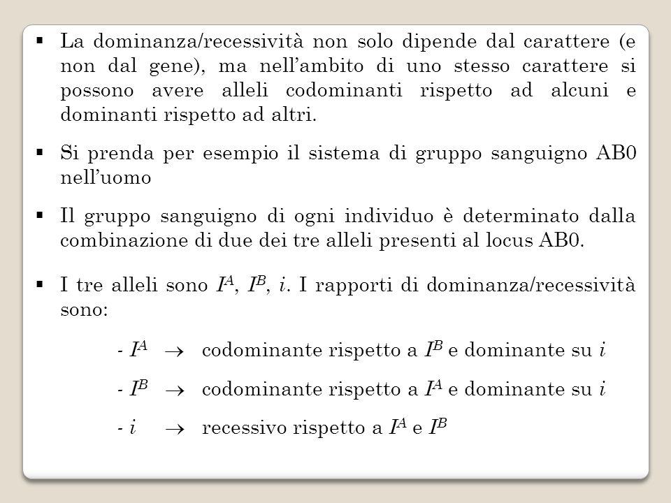 La dominanza/recessività non solo dipende dal carattere (e non dal gene), ma nell'ambito di uno stesso carattere si possono avere alleli codominanti rispetto ad alcuni e dominanti rispetto ad altri.