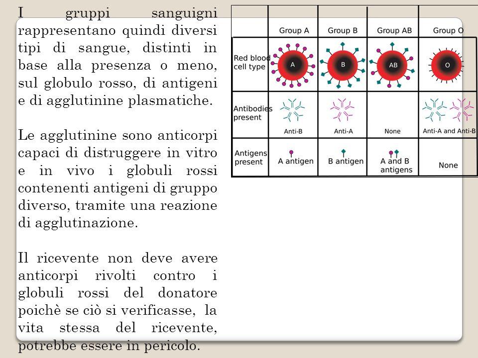 I gruppi sanguigni rappresentano quindi diversi tipi di sangue, distinti in base alla presenza o meno, sul globulo rosso, di antigeni e di agglutinine plasmatiche.