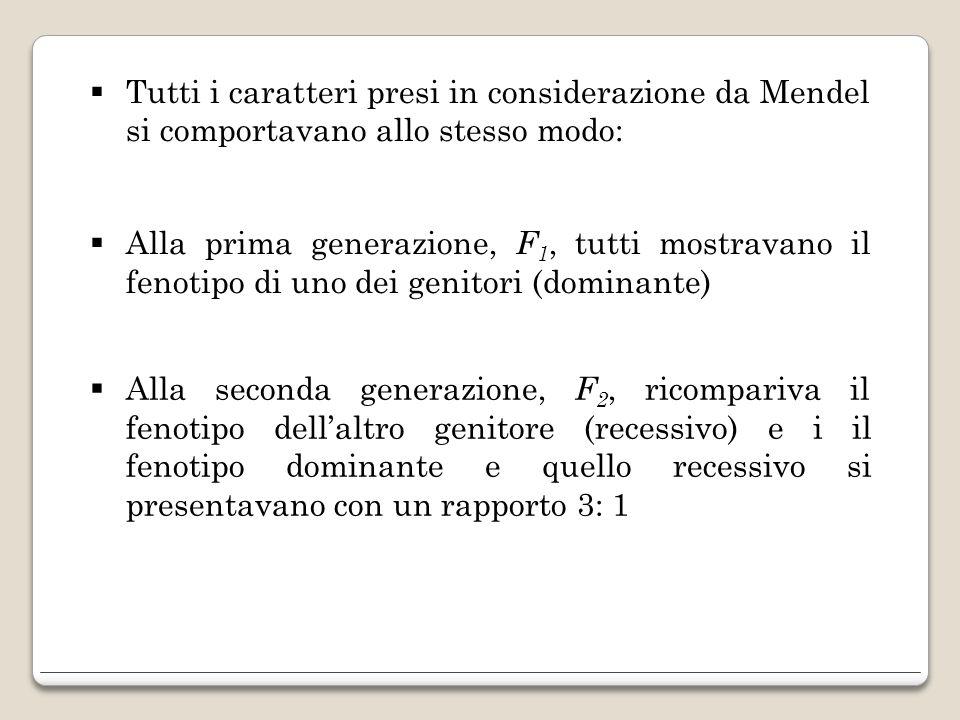 Tutti i caratteri presi in considerazione da Mendel si comportavano allo stesso modo: