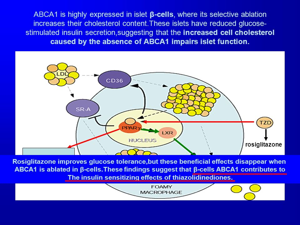 ABCA1 is highly expressed in islet β-cells, where its selective ablation increases their cholesterol content.These islets have reduced glucose-stimulated insulin secretion,suggesting that the increased cell cholesterol caused by the absence of ABCA1 impairs islet function.