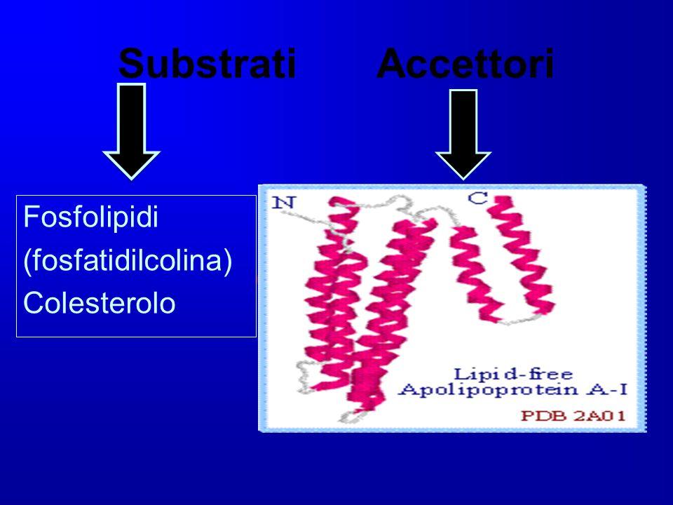 Substrati Accettori Fosfolipidi (fosfatidilcolina) Colesterolo
