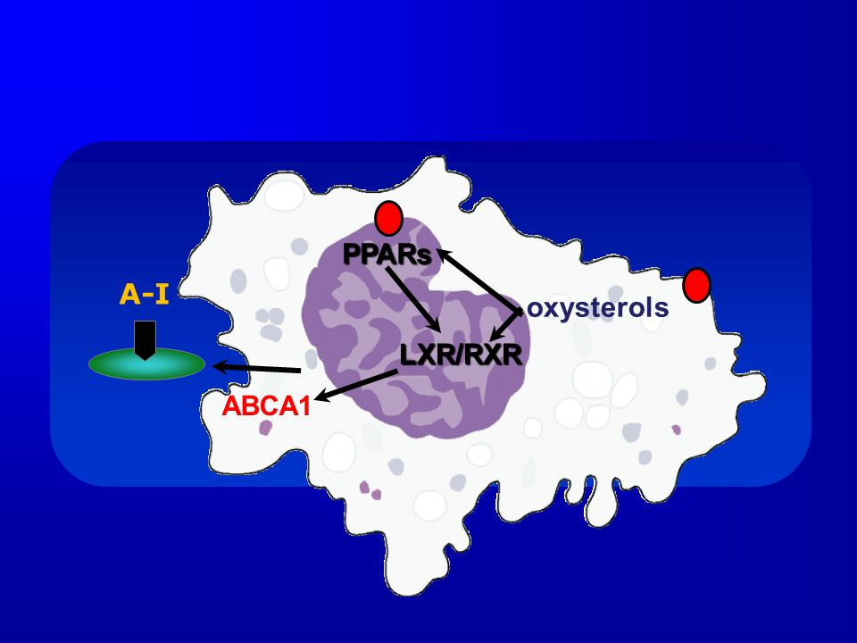 PPARs A-I oxysterols LXR/RXR ABCA1