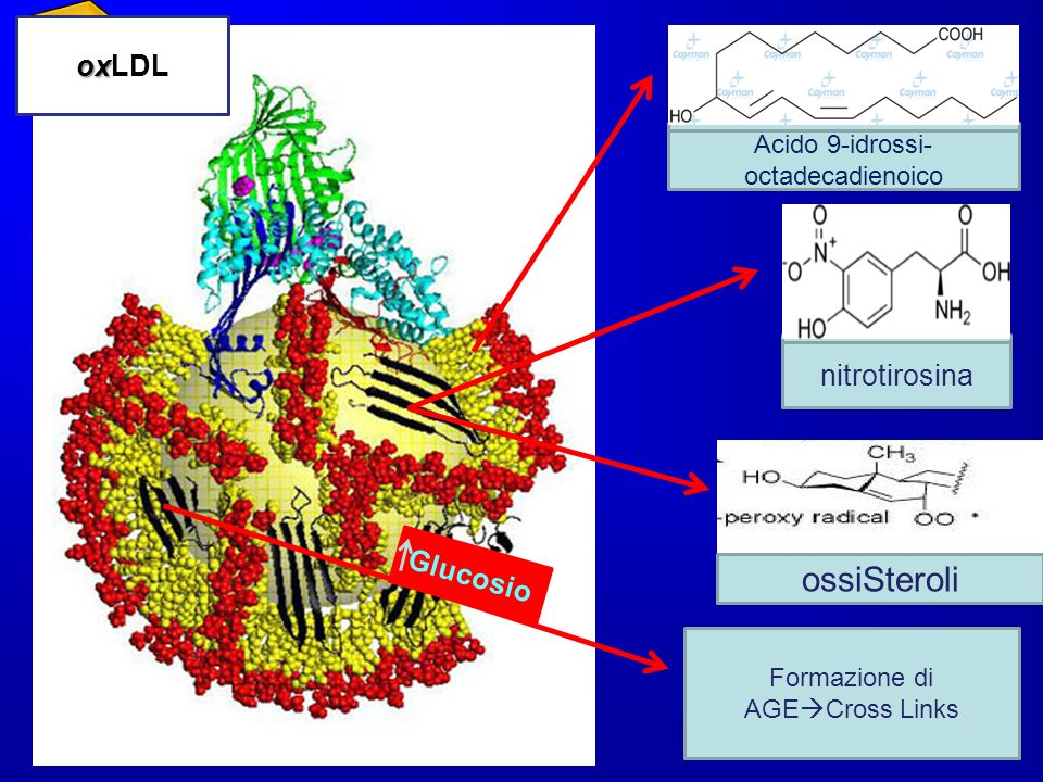 ossiSteroli Steroli LDL oxLDL Tirosina nitrotirosina Glucosio