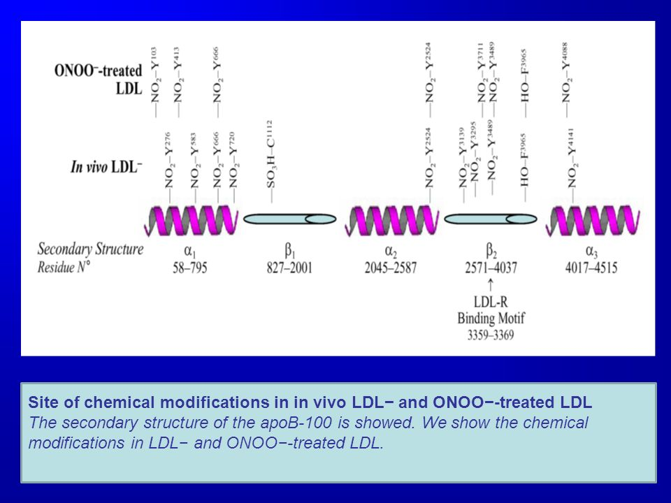 Site of chemical modifications in in vivo LDL− and ONOO−-treated LDL