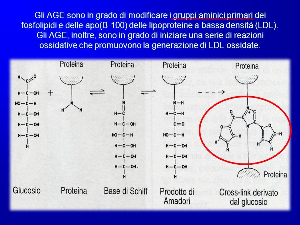 Gli AGE sono in grado di modificare i gruppi aminici primari dei fosfolipidi e delle apo(B-100) delle lipoproteine a bassa densità (LDL).