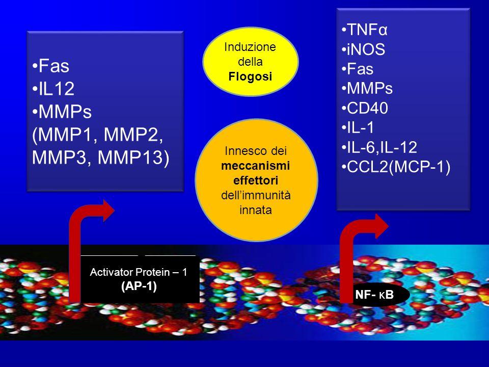 Fas IL12 MMPs (MMP1, MMP2, MMP3, MMP13) TNFα iNOS Fas MMPs CD40 IL-1