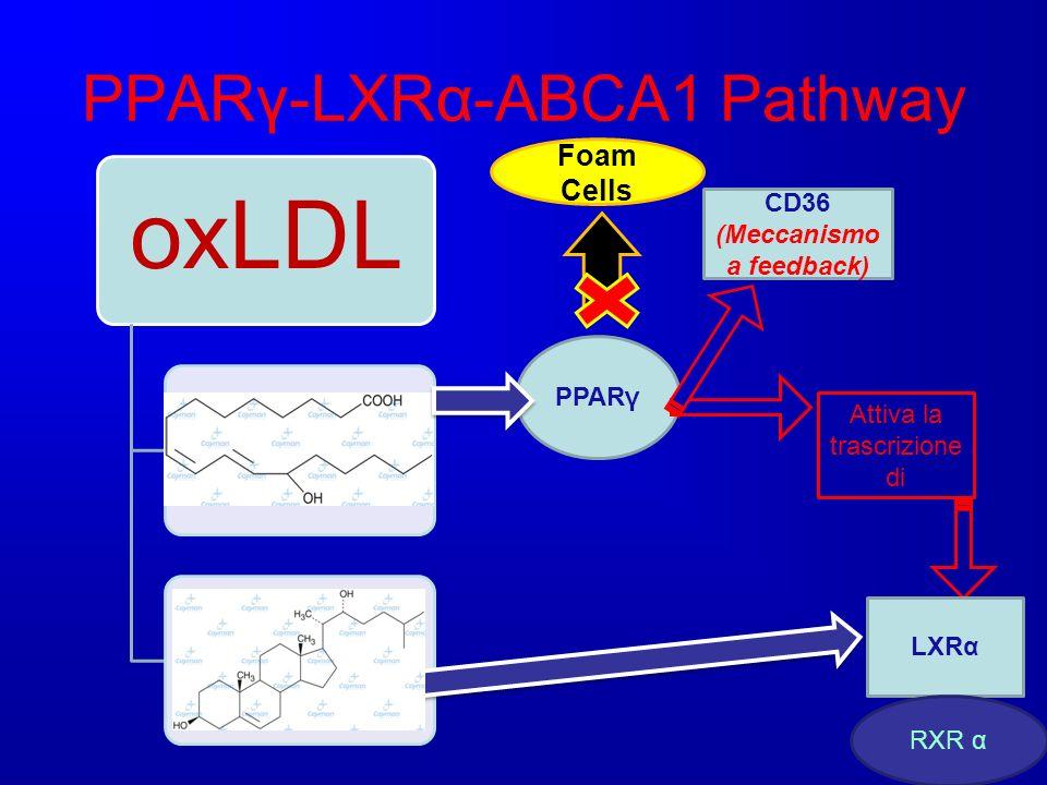 PPARγ-LXRα-ABCA1 Pathway