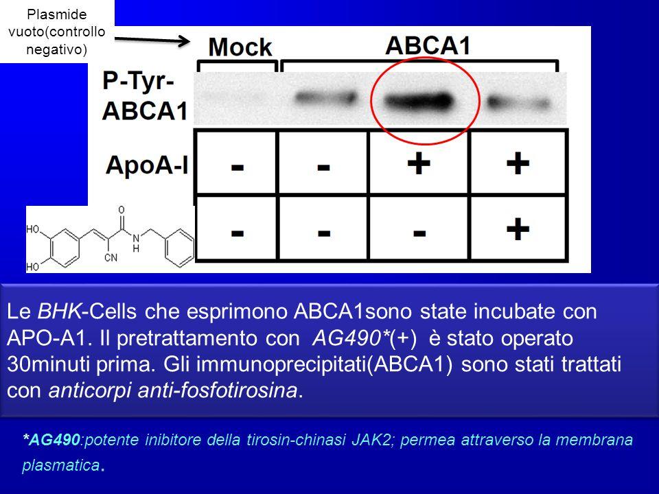 Plasmide vuoto(controllo negativo)