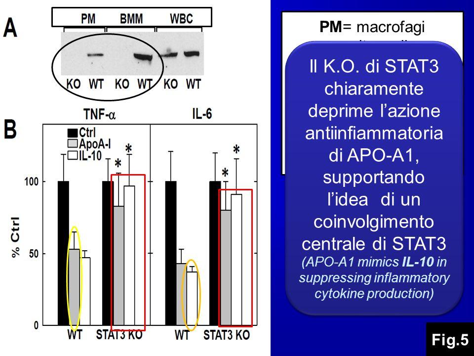 PM= macrofagi peritoneali