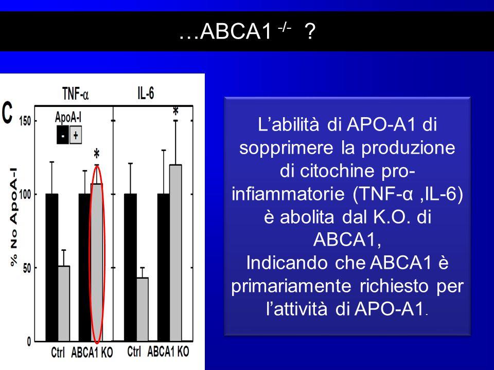 …ABCA1 -/- L'abilità di APO-A1 di sopprimere la produzione di citochine pro-infiammatorie (TNF-α ,IL-6) è abolita dal K.O. di ABCA1,