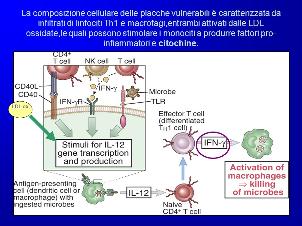 La composizione cellulare delle placche vulnerabili è caratterizzata da infiltrati di linfociti Th1 e macrofagi,entrambi attivati dalle LDL ossidate,le quali possono stimolare i monociti a produrre fattori pro-infiammatori e citochine.
