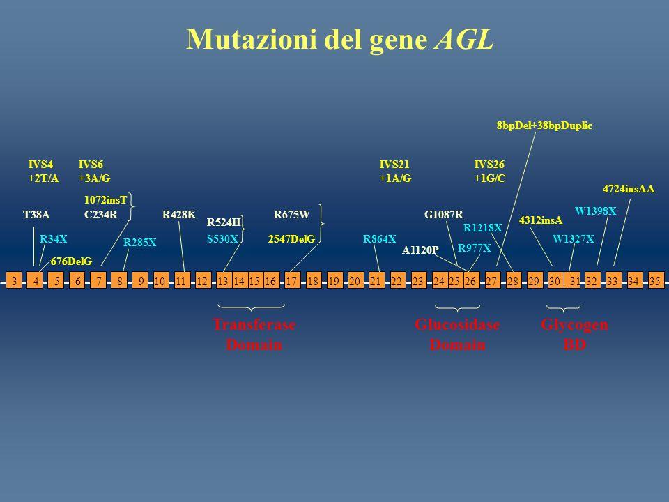 Mutazioni del gene AGL Transferase Domain Glycogen BD