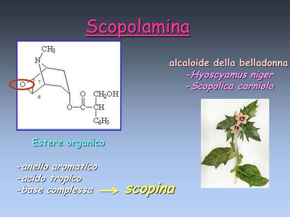 alcaloide della belladonna