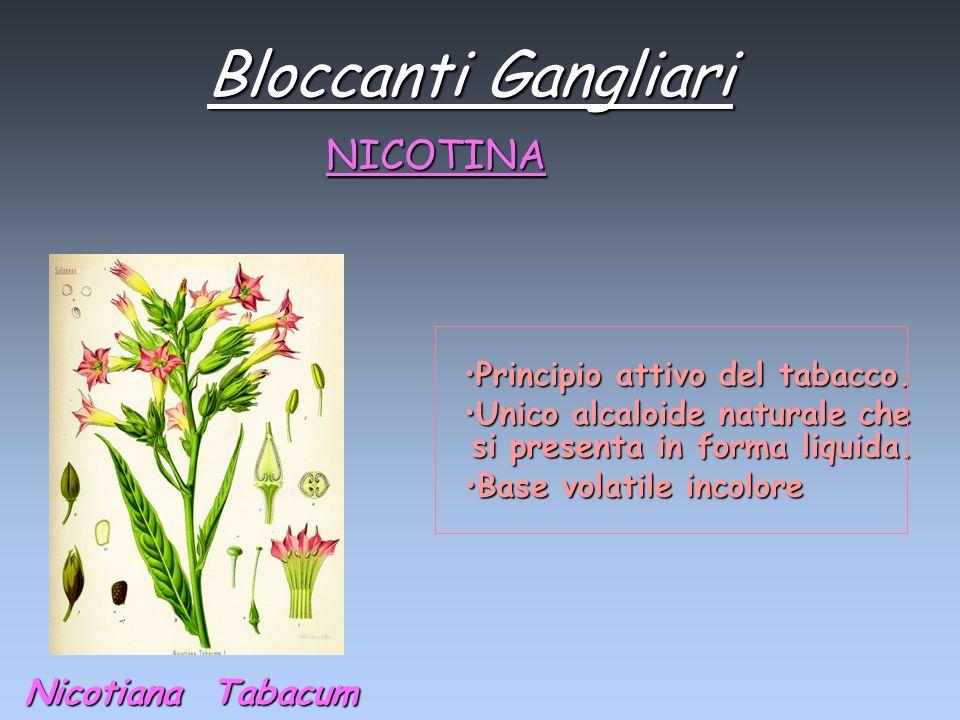 Bloccanti Gangliari NICOTINA Nicotiana Tabacum