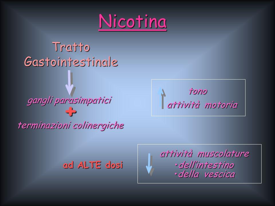 + Nicotina Tratto Gastointestinale gangli parasimpatici