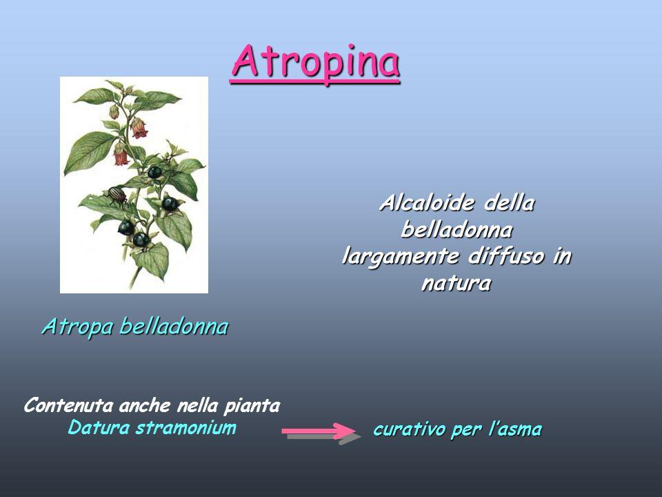 Alcaloide della belladonna largamente diffuso in natura