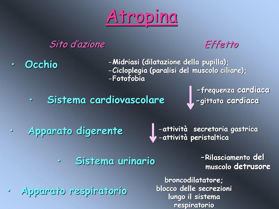 Sistema cardiovascolare Apparato respiratorio