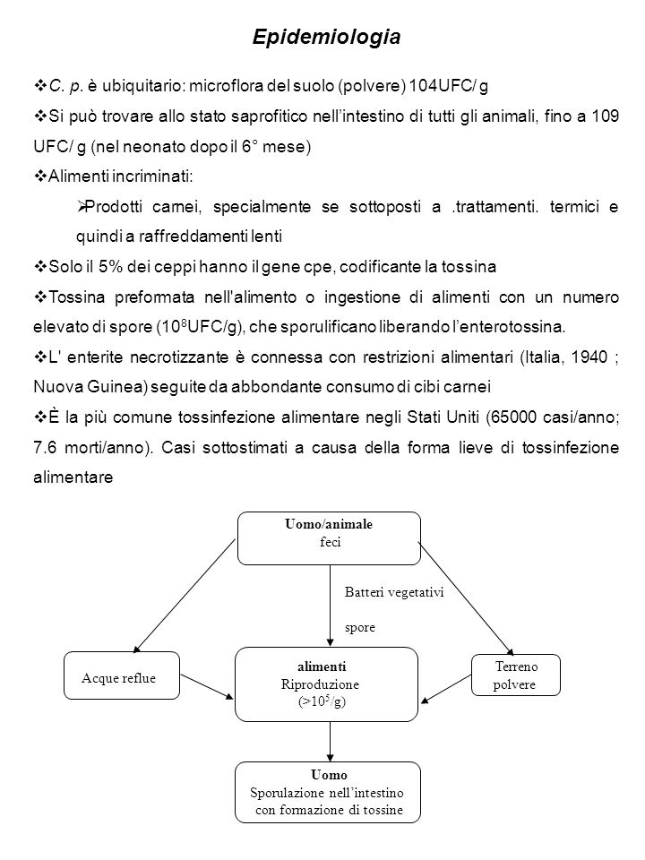 Epidemiologia C. p. è ubiquitario: microflora del suolo (polvere) 104UFC/ g.