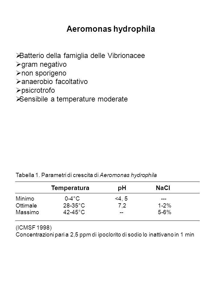 Aeromonas hydrophila Batterio della famiglia delle Vibrionacee