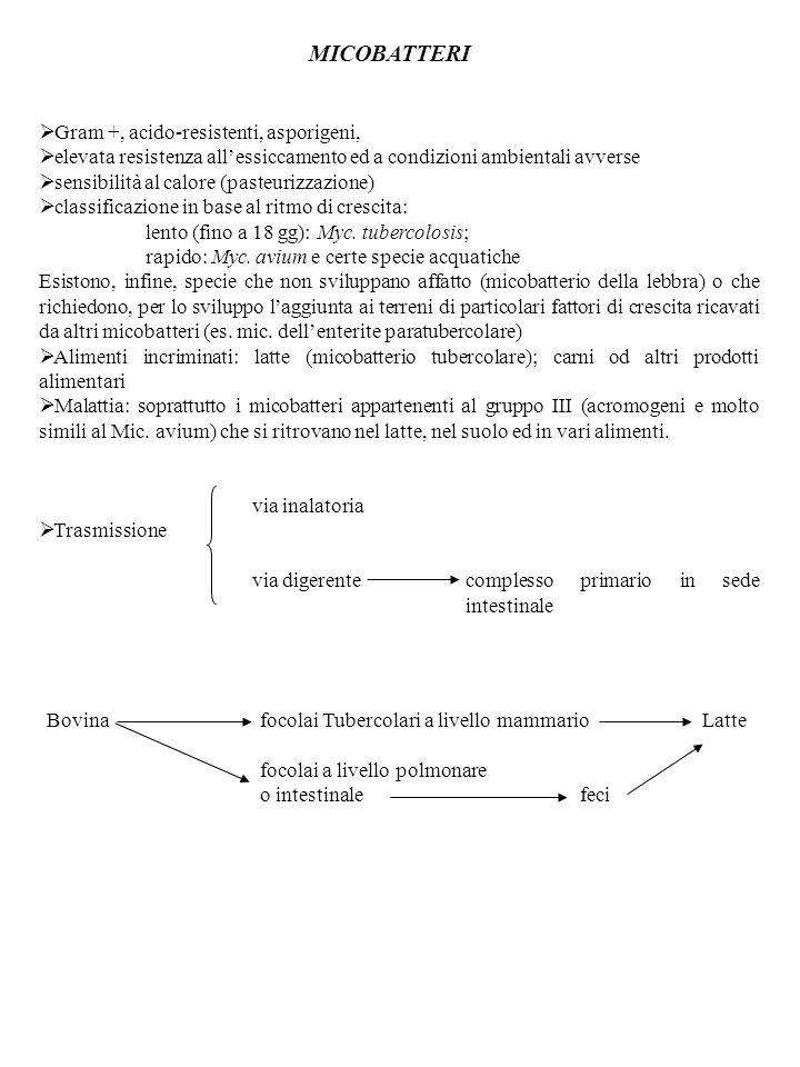 MICOBATTERI Gram +, acido-resistenti, asporigeni,