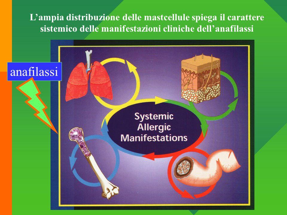 L'ampia distribuzione delle mastcellule spiega il carattere sistemico delle manifestazioni cliniche dell'anafilassi