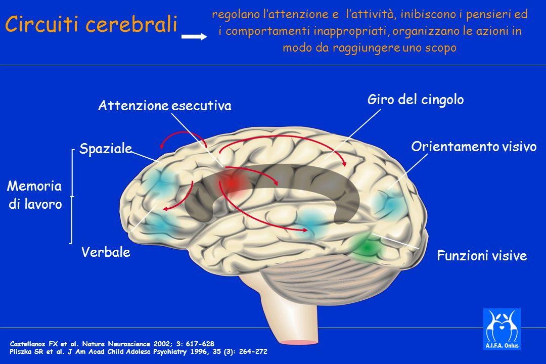 Circuiti cerebrali Giro del cingolo Attenzione esecutiva
