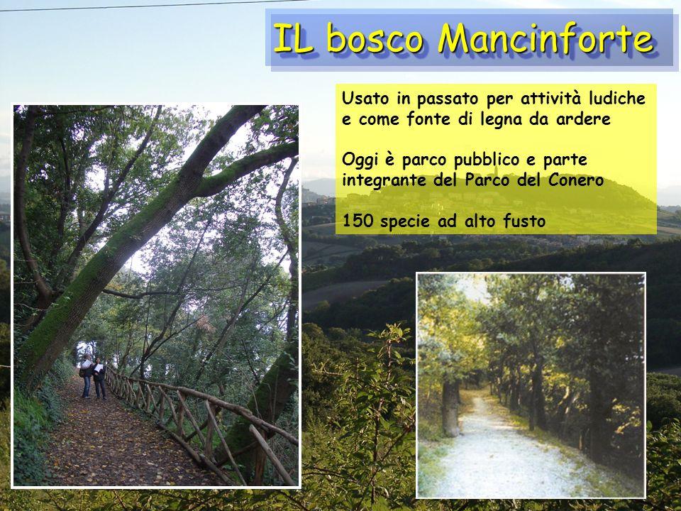 IL bosco Mancinforte Usato in passato per attività ludiche e come fonte di legna da ardere.