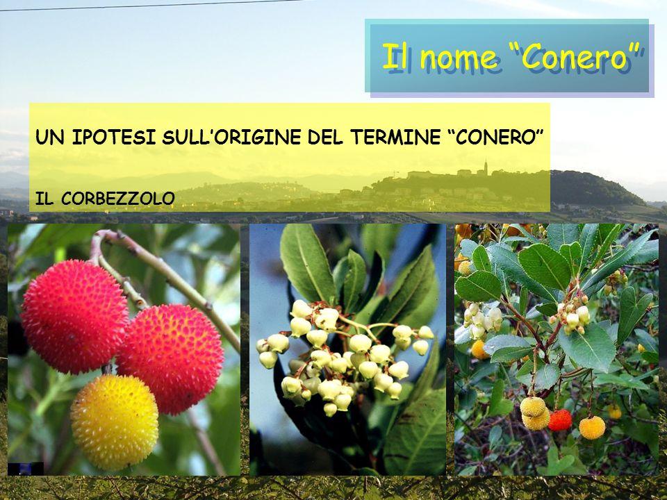Il nome Conero UN IPOTESI SULL'ORIGINE DEL TERMINE CONERO