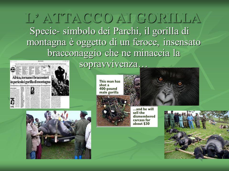L' ATTACCO AI GORILLA