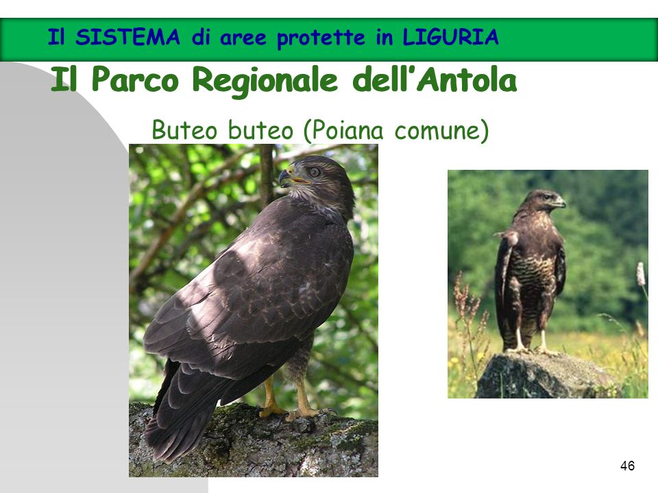 Il Parco Regionale dell'Antola Il Parco Regionale dell'Antola