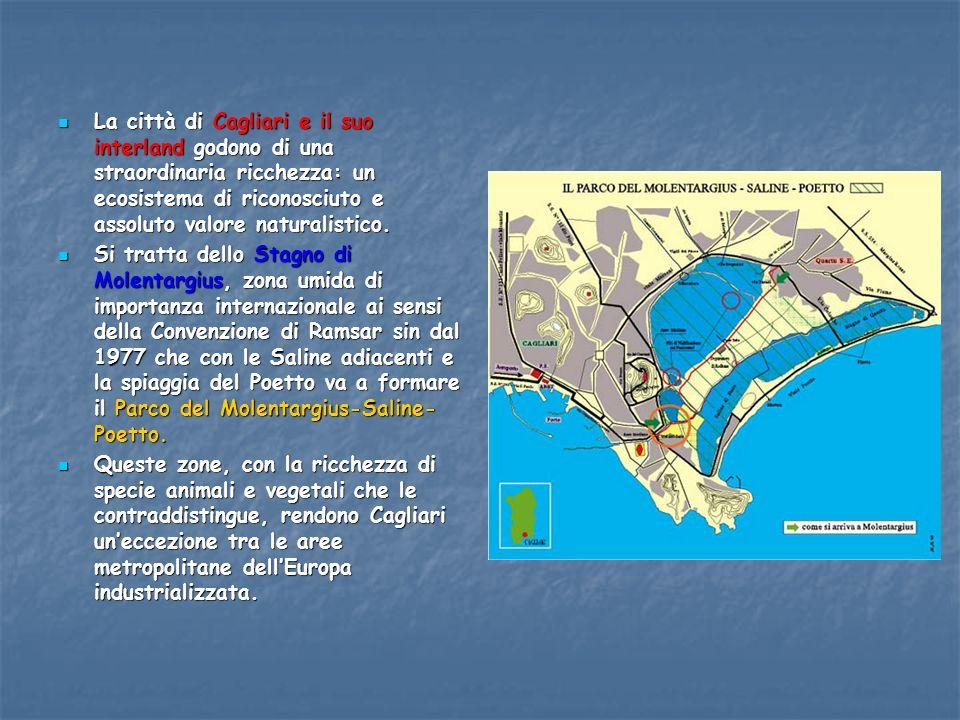 La città di Cagliari e il suo interland godono di una straordinaria ricchezza: un ecosistema di riconosciuto e assoluto valore naturalistico.
