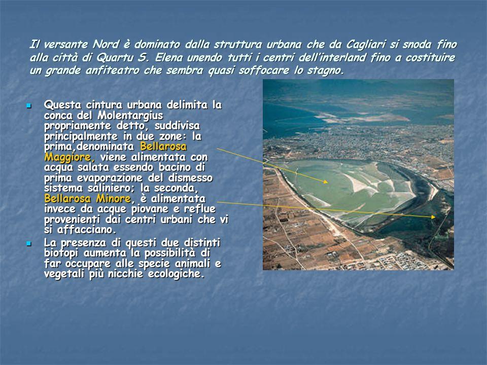 Il versante Nord è dominato dalla struttura urbana che da Cagliari si snoda fino alla città di Quartu S. Elena unendo tutti i centri dell'interland fino a costituire un grande anfiteatro che sembra quasi soffocare lo stagno.