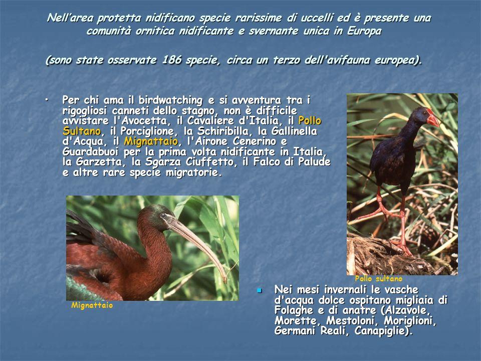 Nell'area protetta nidificano specie rarissime di uccelli ed è presente una comunità ornitica nidificante e svernante unica in Europa (sono state osservate 186 specie, circa un terzo dell avifauna europea).